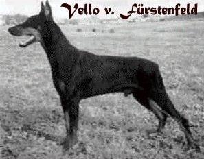 vello_v_furstenfeld_egdupddi.jpg